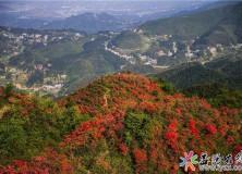 人间最美四月天,安化梅王寨的映山红静悄悄地开了,不一起去看看?