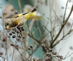 AG和记娱乐生态环境好    新年喜拍金翅鸟
