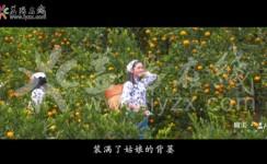 【瞰美·AG和记娱乐】南金橘香