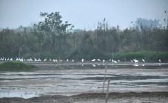 湿地青茅岗
