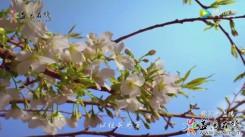 【瞰美·AG和记娱乐】春之礼