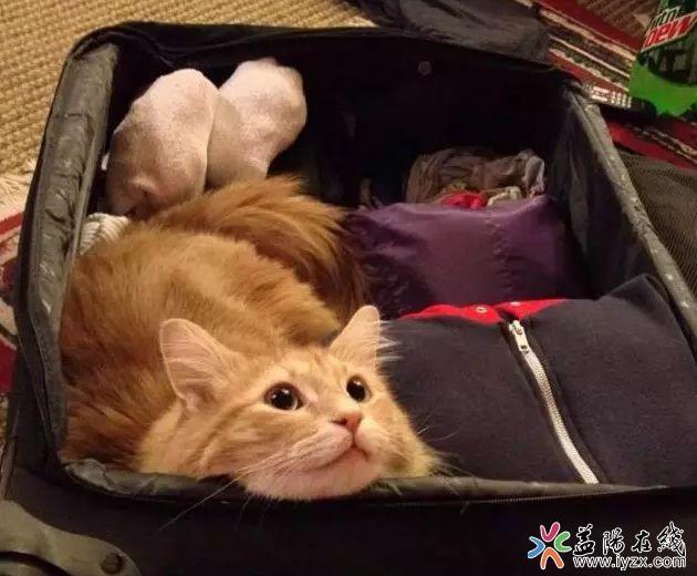 终于可以带宠物坐飞机了,川航3月将推出宠物机票!