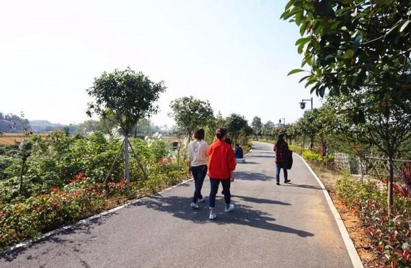 【走进美丽乡村】杨家湾村有生态果