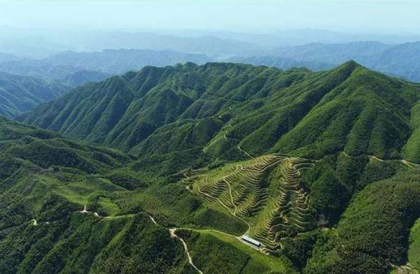 一片树叶书写安化奇迹 ——速写安化黑茶产业量级之变