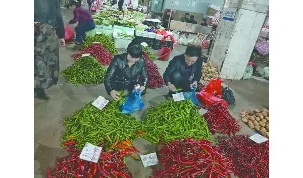 """""""蔬菜自由""""!AG和记娱乐蔬菜价格进入秋季最低时节"""