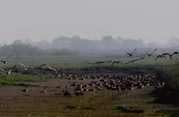 湖阔天高候鸟飞,上万只候鸟迁徙南洞庭湖